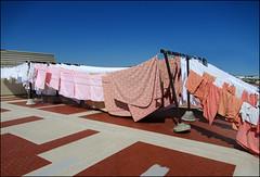 Aria di pulito (Maulamb) Tags: bucato pannistesi