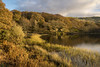 Autumn colour at Llyn Tecwyn Isaf (Keartona) Tags: llandecwyn llyntecwynisaf lake beautiful autumn autumnal warm woodland trees grasses reeds bracken colours wales northwales evening water landscape harlech october sunlight sunshine