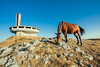 buzludzha monument in Bulgaria (filchist) Tags: buzludzhamonument bulgaria arhitecture horse abandonedbuilding buzludzha бузлуджа заброшенноездание болгария