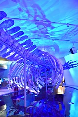 Out of the Depths-The Blue Whale Story, Royal Ontario Museum, Toronto, ON (Snuffy) Tags: outofthedepthsthebluewhalestory royalontariomuseum rom toronto ontario canada