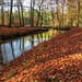 A golden autumn day in the woods (Peter u Hilde) Tags: goldenerherbsttag ahausermühle