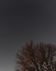 PB170721 (Paul Henegan) Tags: 54cropvertical availablelight clouds longexposure night sky stars tree astrometrydotnet:id=nova2349742 astrometrydotnet:status=solved