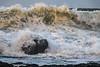 Rough Sea (nstirling) Tags: sea portrush waves rocks rough winter bigwaves canon canoneos750d spray coastal ocean powerful windy stormy nature powerofnature
