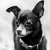 Joseph18Nov201767-Edit.jpg (fredstrobel) Tags: dogs pawsatanta phototype atlanta blackandwhite usa animals ga pets places pawsdogs decatur georgia unitedstates us
