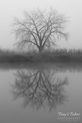 Bare tree reflections in black and white