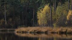 Oisterwijk (karindebruin) Tags: geel autumn leaf brabant canon dutch nederland fens vennen fallcolors grass gras holland herfst landscape landschap lake meer netherlands reflectie reflection thenetherlands trees bomen water oisterwijk