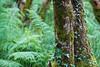 Ireland - Connemara National Park (Marcial Bernabeu) Tags: irlanda ireland irlandes irish national park paque nacional connemara green verde trees arboles vegetacion marcial bernabeu bernabéu