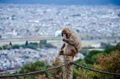 Kyoto Monkey (EwanHarris) Tags: japan kyoto imperial palace nijo castle bamboo arashiyama forest tree trees japanese fushimi inari kinkaku ji golden temple monkey macaque