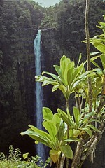 img026 (Pirate des îles moderne) Tags: hawaii waterfalls chutes plantes oahu