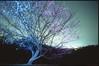 (✞bens▲n) Tags: pentax lx provia 100f at200 mamiya 50mm f2 film analogue slide japan gunma plum blossoms tree nightscape light dark flowers longexposure
