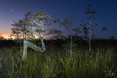 Everglades Z Tree (J.Coffman Photography) Tags: everglades dwarf cypress tree z astrophotography night landscape