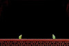 17106274 (felipe bosolito) Tags: india fatehpursikri bird green red black minimalism fuji xpro2 xf1655 velvia