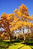 Rome 14 (Garry Blackburn) Tags: tree floraandfauna autumn leaves borghesegardens