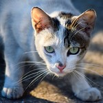 Una princesita callejera #gatoscallejeros #cats #photocats #instacats #neko #meow #gatze #gatto #koshka #catsofworld #catsofinstagram #streetcats #chat thumbnail