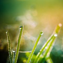 Nature at sunrise (Zeeyolq Photography) Tags: france green macros bretagne plants nature milizac fr