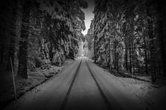 20171129001211 (koppomcolors) Tags: koppomcolors forest skog winter vinter