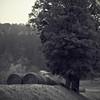 Sur la paille (Un jour en France) Tags: monochrome nature paille paysage