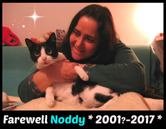 Farewell my dear Noddy ! :'( (Silvia Inacio) Tags: noddy tuxedo tribute rip gato gatos cat cats farewell rainbowbridge