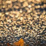 Golden Autumnn Road thumbnail