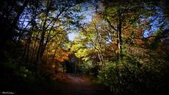 """ Before the Autumn Winds "" ("" P@tH Im@ges "") Tags: claravalecowicklow autumncolours picasa3 hoyandvarifilter panasonicfz200"