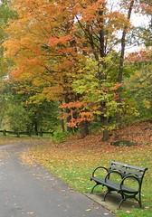 IMG_1298b (Naturecamhd) Tags: canonpowershotsx700hs sx700hs newyorkbotanicalgarden nybg autumn fall fallfoliage forest path bench nature green eco botanicalgarden leaves bronx thebronx
