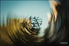 20171209-0923-DSC_7607.JPG (atalwar) Tags: artistic amittalwar trickphotography specialtechniques specialeffect naturephotography abstractphotography natureabstracts