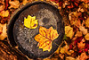 Fall and the Fallen (Simmie | Reagor - Simmulated.com) Tags: 2017 autumn connecticut connecticutphotographer fall fallcolor forest landscape landscapephotography loversleapstatepark nature naturephotography newengland november outdoors unitedstates woods ctvisit digital https500pxcomsreagor httpswwwinstagramcomsimmulated overcast wwwsimmulatedcom middlefield us