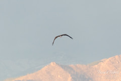 The eagle heads off for quieter spots