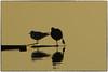 P1010069 (fotokunst_kunstfoto) Tags: stimmung abendstimmung mood silhouette silhouett silhouetten schattenbilder umriss kontur konturen schattenriss