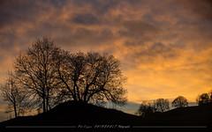 jura_phil-249.jpg (p.raimbault) Tags: automne brume cascades foret jura mousses paysage sunset vignes