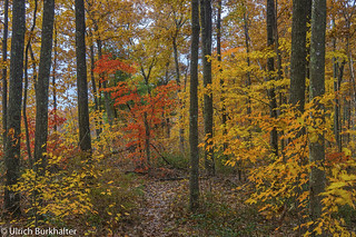 In the Autumn forest in the Appalachian mountains of Kentucky.