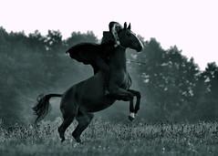 SHOOTING (Gila98) Tags: pferd reiter reiterin feld fotoshooting grau umhang düster pferdeshooting