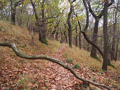 (Reimfee) Tags: natur pur bäume bizarr harzwald herbst sachsen anhalt reimfee germany