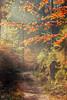 Waldweg (Dirk Hoffmann Fotografie) Tags: yellow autumn forest sun sunlight sunray leaves leav saxony switzerland saxonswitzerland saechsische schweiz saxon sachsen germany landscape way path lane alley