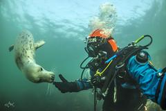Eye 2 Eye (Mike Clark 100) Tags: mikeclark underwater diving grey seal farne island england play