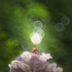 el alma (pixiespark) Tags: soul sunlight sonnenlicht wings fluegel blossoms blueten nature natur bokeh elalma