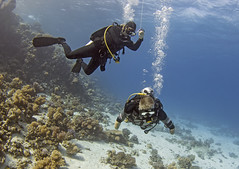 quadruple amputee man takes diving course 28 (KnyazevDA) Tags: disability disabled diver diving deptherapy undersea padi underwater owd redsea buddy handicapped aowd egypt sea wheelchair travel amputee paraplegia paraplegic