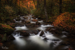 Rolling Autumn River (Reid Northrup) Tags: water river stream forest trees creek tree rock landscape nature rrs nikon reidnorthrup southcarolina jonesgapstatepark rocks cascades cascade autumn fall