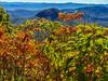 Blue Ridge fall (Tim Ravenscroft) Tags: leaves fall autumn blueridgemountains hasselblad hasselbladx1d x1d