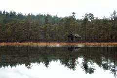 Abandoned (Olli Tasso) Tags: seitseminen nationalpark kansallispuisto suo swamp lake pine forest reflection heijastus suomi finland autumn syksy travel outdoors nature luonto matkailu kotimaanmatkailu järvi mänty mäntymetsä metsä luontonähtävyys landscape scenery maisema