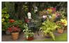 Busy Corner (Audrey A Jackson) Tags: canon60d garden nature flowers plants colour pots chairs ornaments canon60