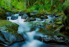Flow (Kent Wilkins) Tags: kentwilkinsphotography thunderbirdpark long exposure river creek flow rocks bush water tranquil cedar queensland australia landscape