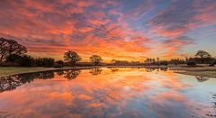 Mogshade Dawn (nicklucas2) Tags: landscape newforest mogshade pond reflection cloud dawn tree water