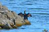 A-LUR_2273 (OrNeSsInA) Tags: trasimeno uccelli bird natura italia umbria castiglionedellago ornessina lucarosi nikon tamron byrd lago chiusi siena perugia aironi cormorani