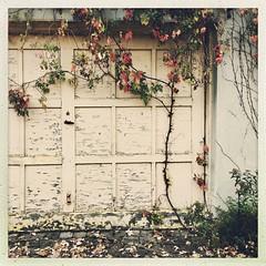 Ça fait du bien avant l'hiver... (woltarise) Tags: garage prte outremont montréal ruelle arbuste