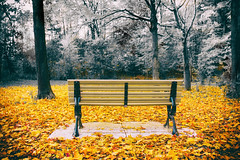 A Seat in Autumn (A Great Capture) Tags: selective agreatcapture agc wwwagreatcapturecom adjm ash2276 ashleylduffus ald mobilejay jamesmitchell toronto on ontario canada canadian photographer northamerica torontoexplore fall autumn automne herbst autunno 2016 eos digital dslr lens canon 70d natur nature naturaleza natura naturephotography naturethroughthelens scenery scenic vibrant colorful cheerful vivid bright woods trees tree arbre forest wald leaves leaf foliage autumnleaves branch branches bench