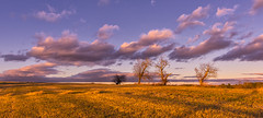 Three Sisters, Mosher Road, Westbrook, ME 3 (Cindy Farr-Weinfeld) Tags: westbrook maine rural sunset clouds sky blue trees field flat cloudscape panorama panoramic