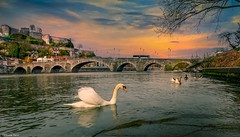 landscape - 4133 (ΨᗩSᗰIᘉᗴ HᗴᘉS +19 000 000 thx) Tags: swan landscape 7dwf namur belgium be bel eu cygne bird hdr 3exp hensyasmine yasminehens europa europe meuse water