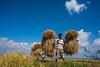 Beautiful Bangladesh (Zakir_Hossain) Tags: amazingbangladesh bangladesh beautifulbd beautifulbangladesh canvasofcolor chittagong color county explorebd explorebangladesh image landscapebangladesh landscapes lovelybangladesh nature naturephotography nikon nikonlove outdoor people photo photographs photography stockimage stockphoto tavelbangladesh tourbangladesh tourisumbangladesh zakirhossain zakirzakirhossain camera serene