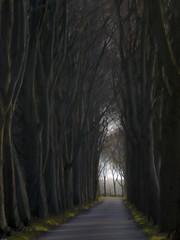 Hooidijk (Jan R. Ubels) Tags: autum fall herfst tree boom beuk weg straat road dmctz30 panasoniclumix lumix panasonic drenthe netherlands nederland vries hooidijk flickr